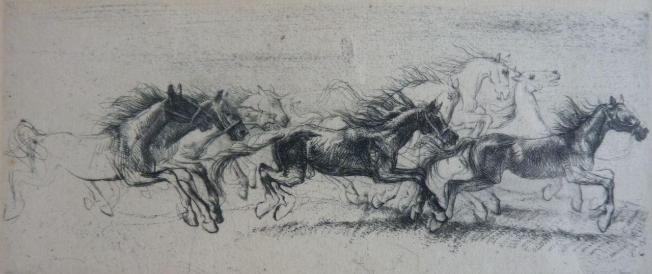 Pádící koně