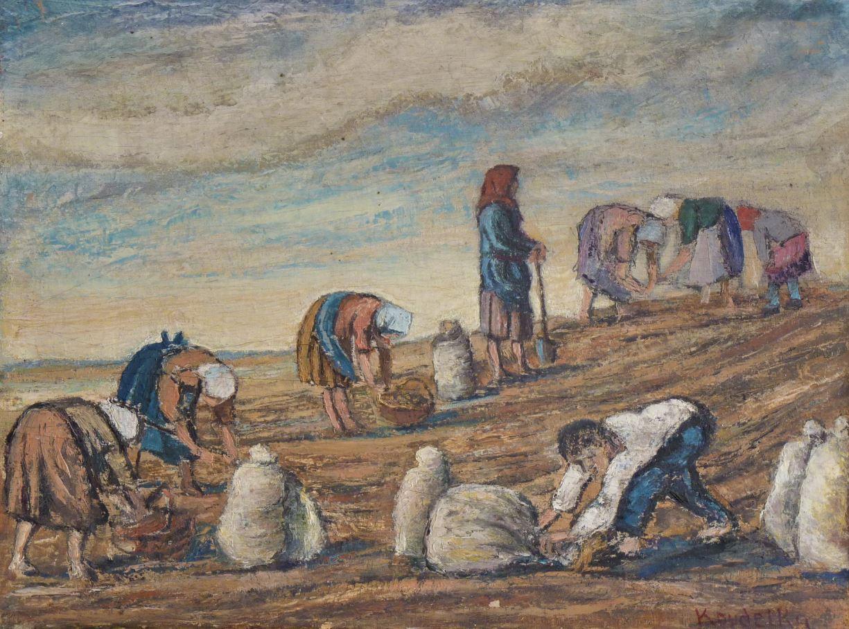 Vybírání brambor